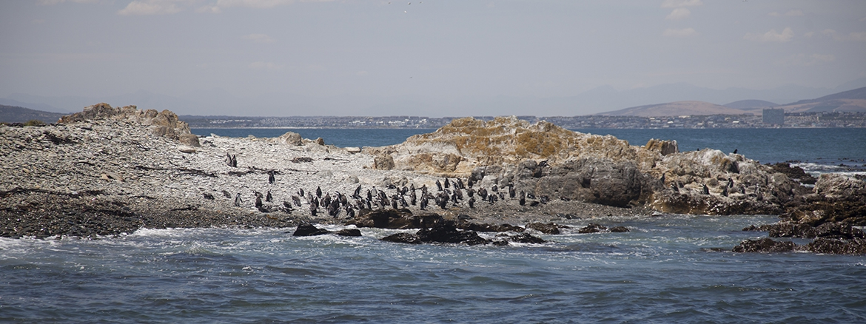 photo Robben Island
